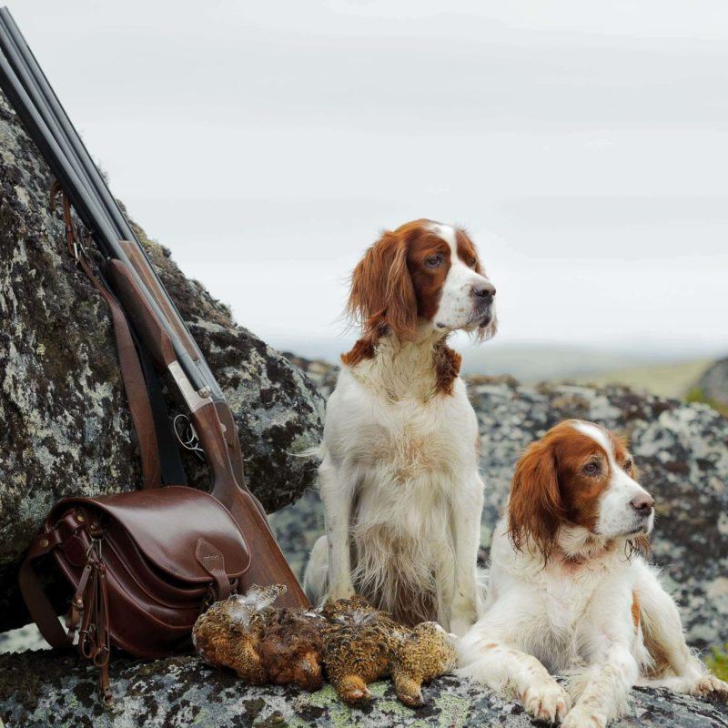 Jagd&Hund